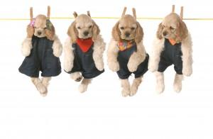 Curs de perruqueria canina